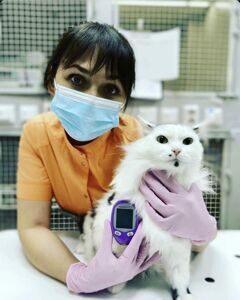 Ветеринарный глюкометр AlphaTRAK